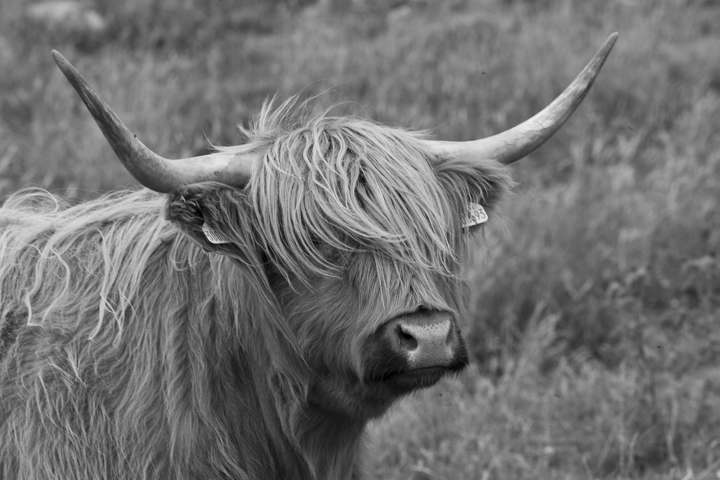 culfoich_highlanders_0104.jpg
