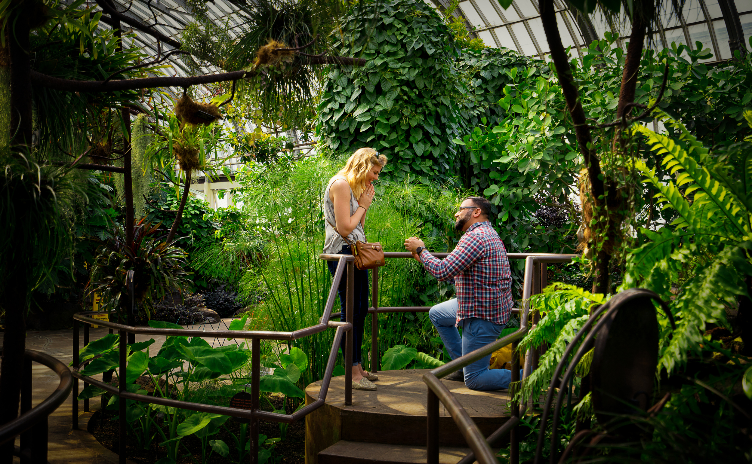 Surprise Proposal at Garfield Park Conservatory