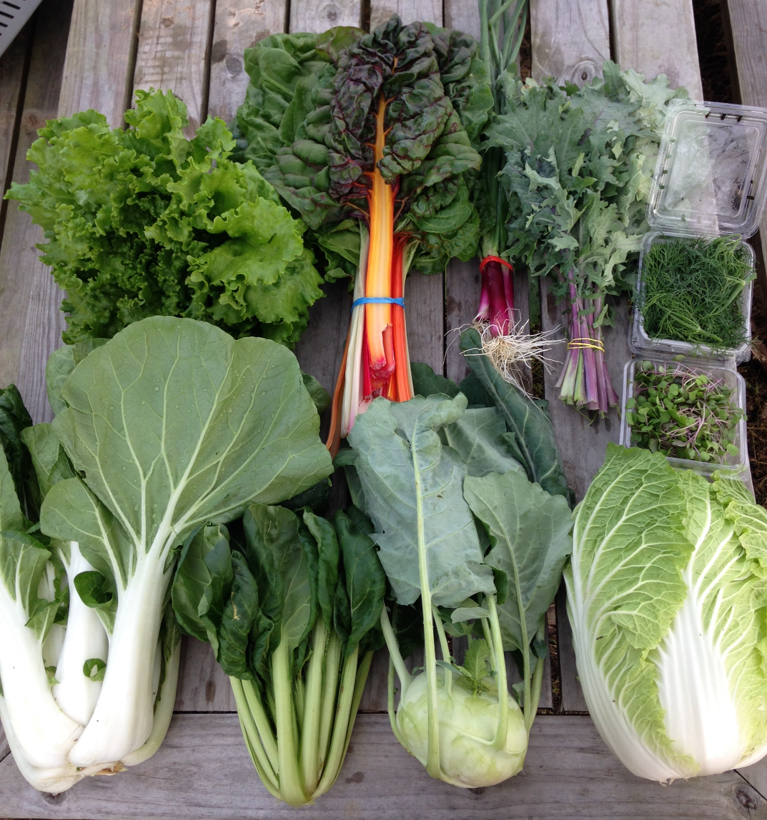 from top left to right: Lettuce, Swiss Chard, Spring Onions, Kale, Dill, Micro Greens  from bottom left to right: Bok Choy, Yukina Savoy, Kohlrabi, Napa Cabbage