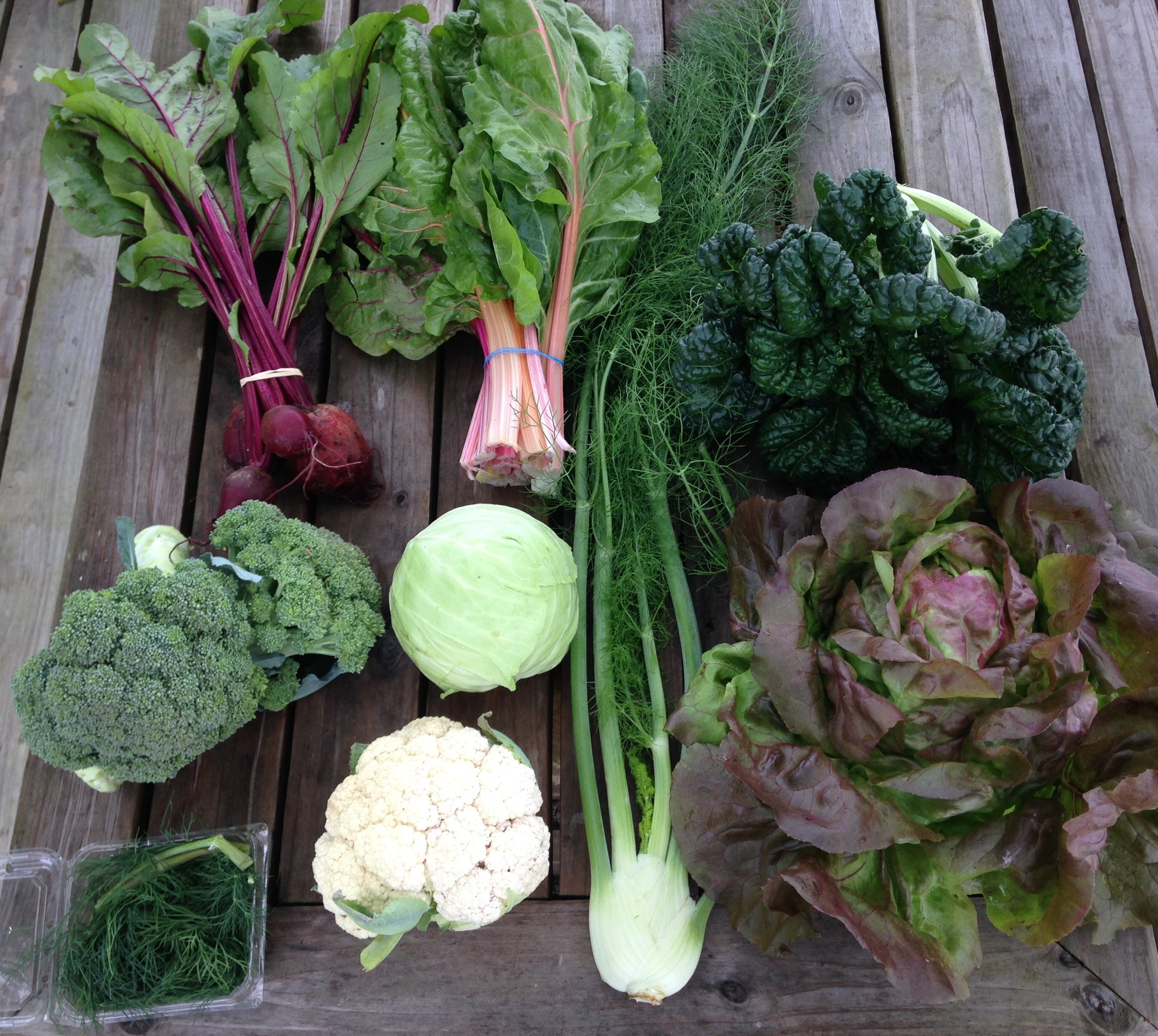 top row left to right: beets, swiss chard, yukina savoy.  middle row left to right: broccoli, green head cabbage  bottom row left to right: dill, cauliflower, fennel, red bibb lettuce.