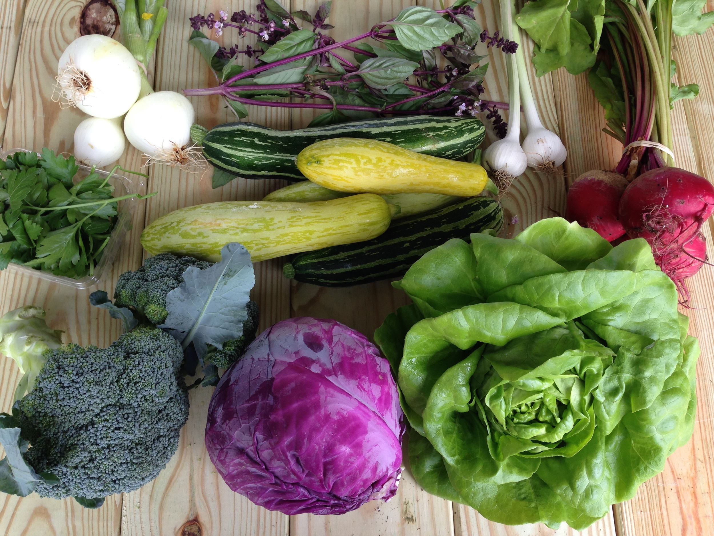 top left to right: onion, Thai basil, and garlic  middle left to right: parsley, squash and zucchini, and beets  bottom left to right: broccoli, purple cabbage, and bibb lettuce