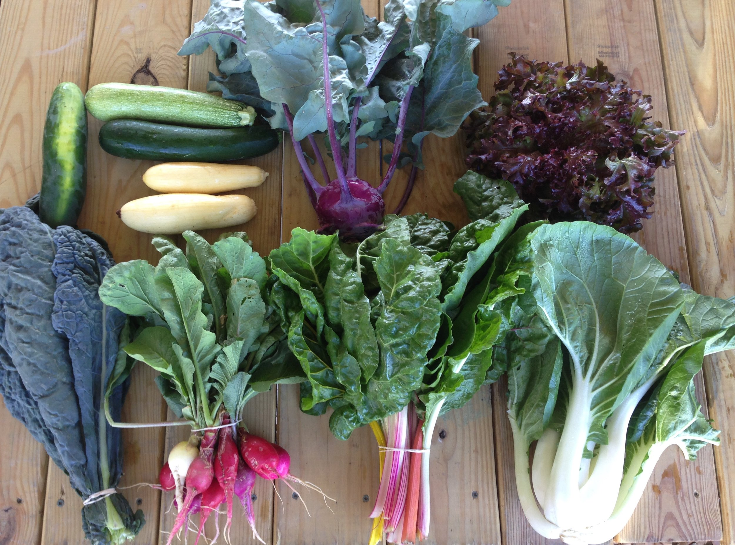Contents of this week's box: Top row: cucumber, zucchini, squash, kohlrabi, lettuce. Bottom row: dino kale, easter egg radishes, swiss chard, bok choy