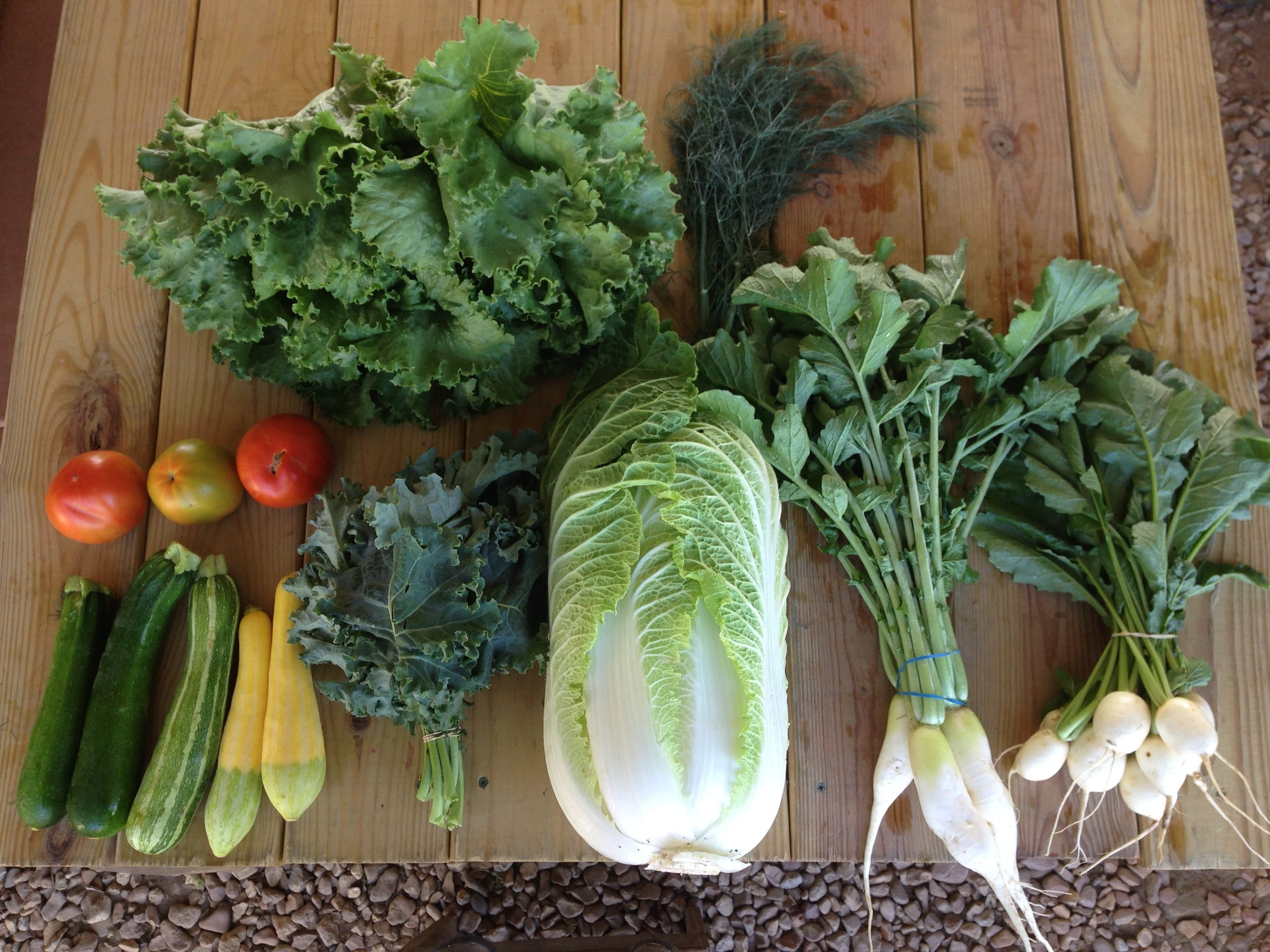 Contents of this week's box include: lettuce, dill. Next row tomatoes, zucchini, squash, kale, napa cabbage, daikon radishes, and hakurei turnips.