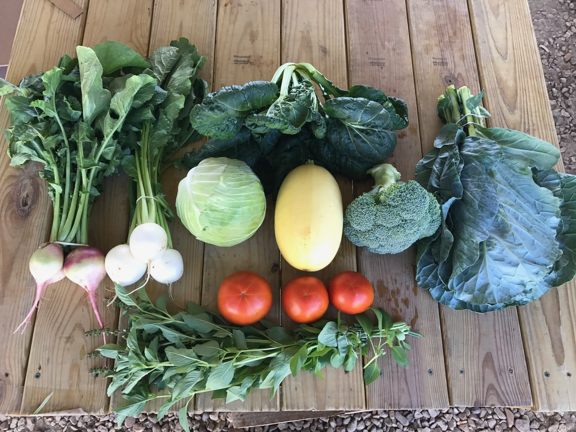 Top left: Watermelon radish, Hakurei turnip, Yukina Savoy, below the Yukina from left to right: green cabbage, Spaghetti squash, broccoli, and collard greens. Below tomatoes and then lemon basil.