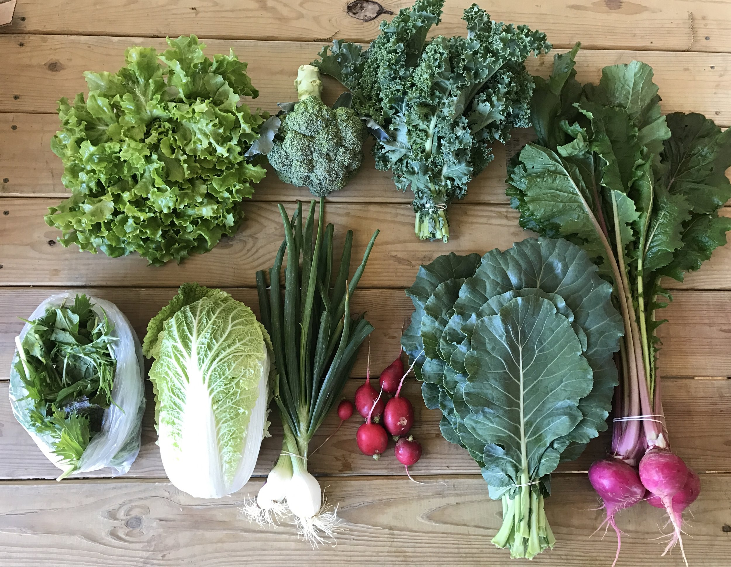 Top Row: Green Leaf Lettuce, Broccoli, Curly Kale  Bottom Row: Braising Mix, Napa Cabbage, Spring Onions, Red Radish, Collards, Scarlet Turnips