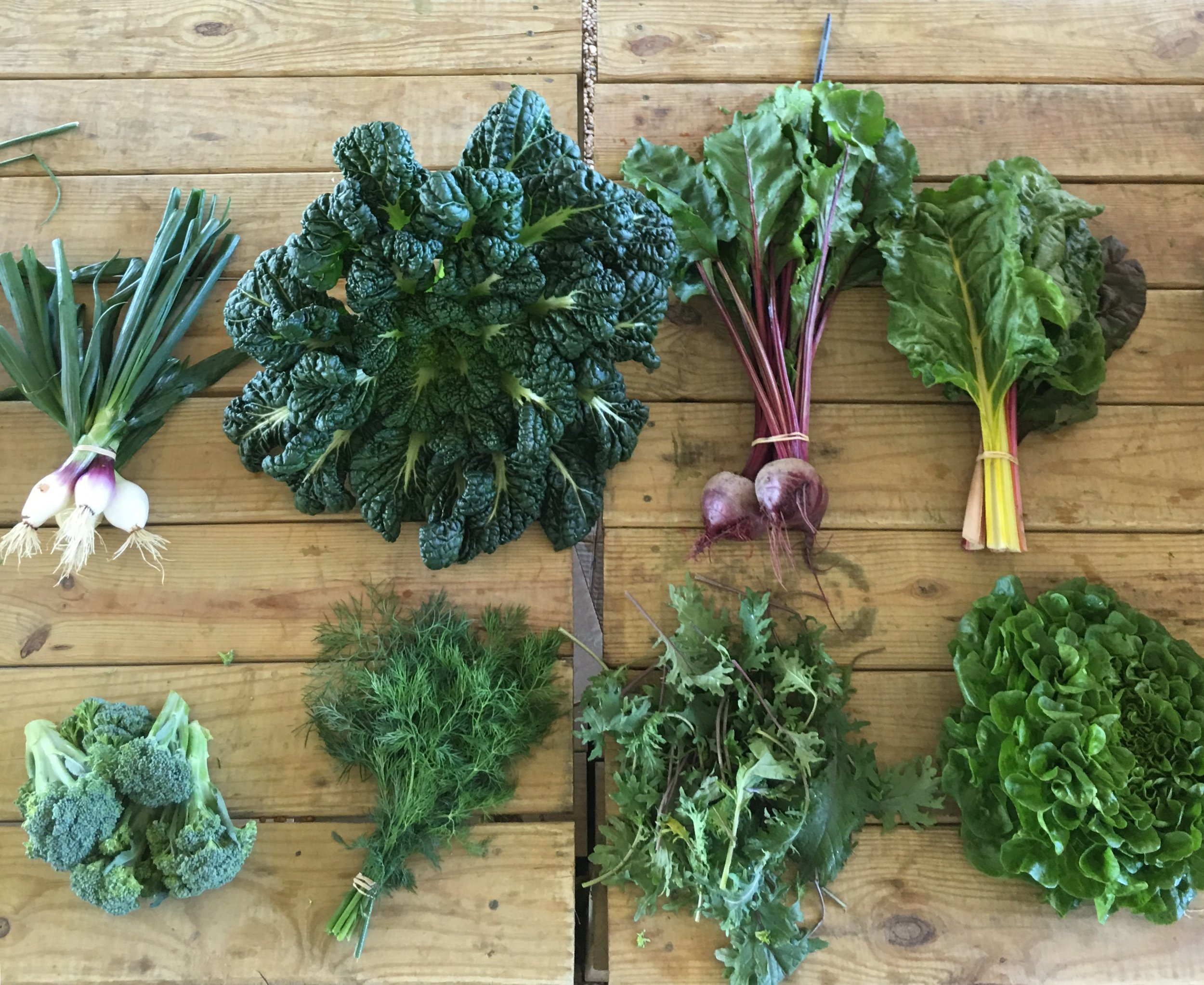 Top row left to right- spring onions, yukina savoy, red beets, and swiss chard  Bottom row left to right- broccolini, dill, baby kale, and lettuce
