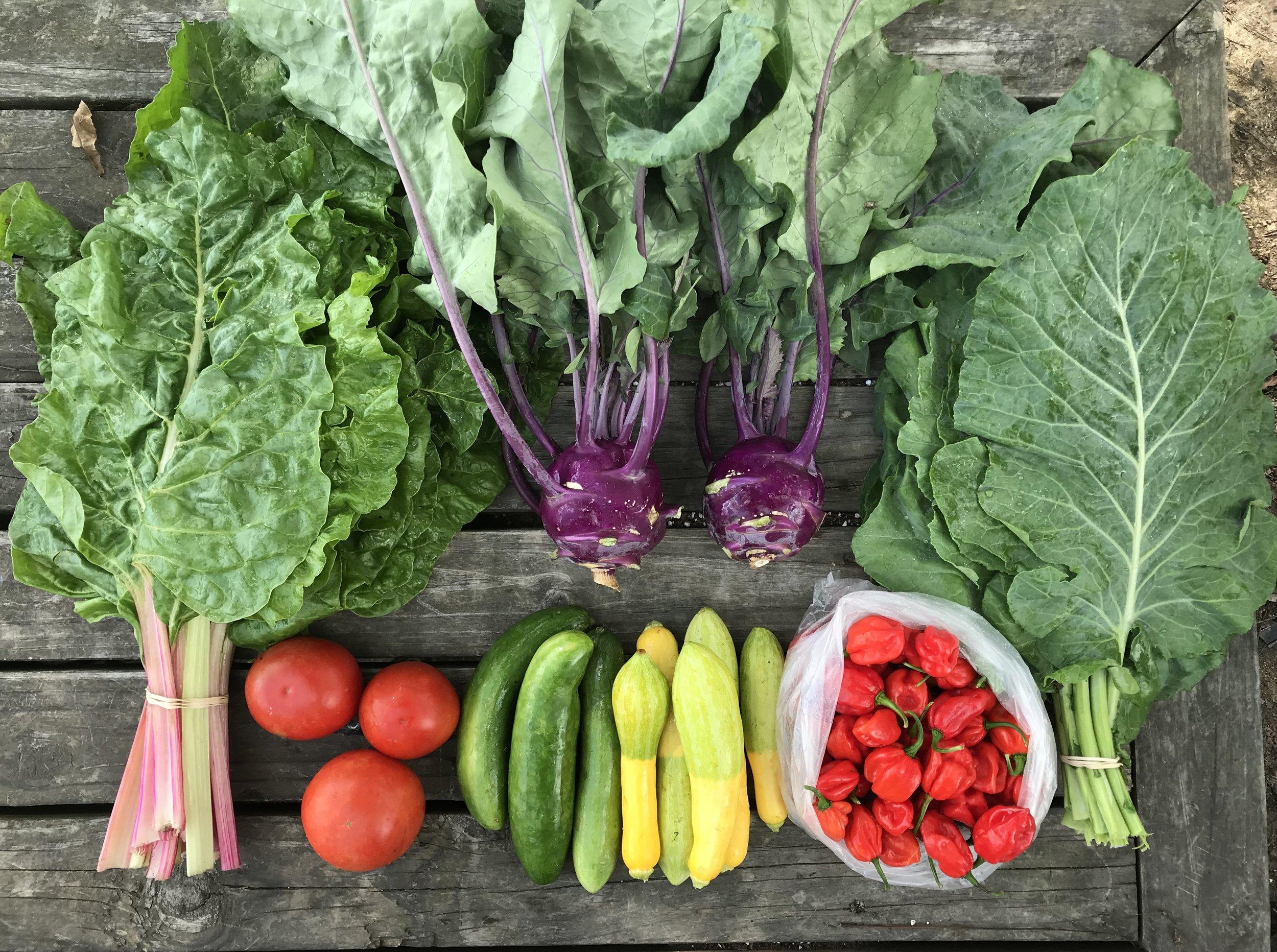 Top Row: Swiss Chard, 2 Kohlrabi, and Collard Greens  Bottom Row: Tomatoes, Cucumbers, Squash, and Aji Dulce Peppers