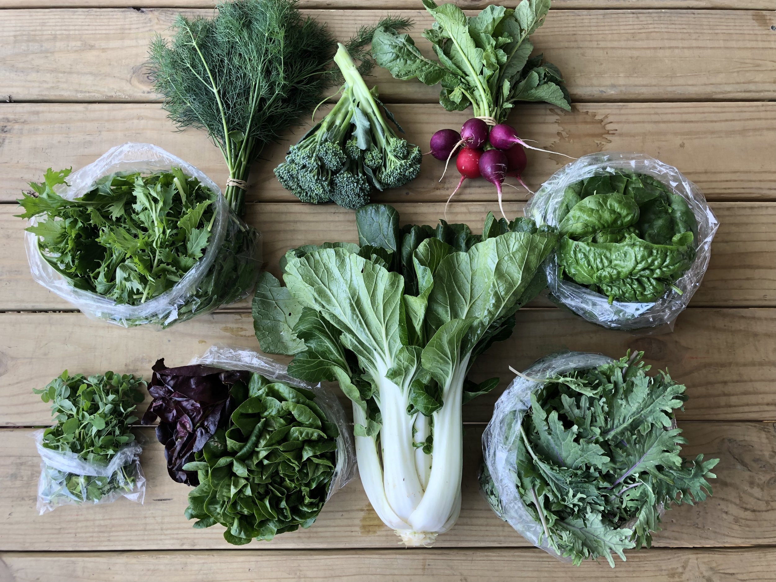 Top Row: Dill, Broccolini, and Radishes  Middle Row: Mizuno Mix, and Spinach  Bottom Row: Pea Shoots, Lettuce, Bok Choy, and Baby Kale