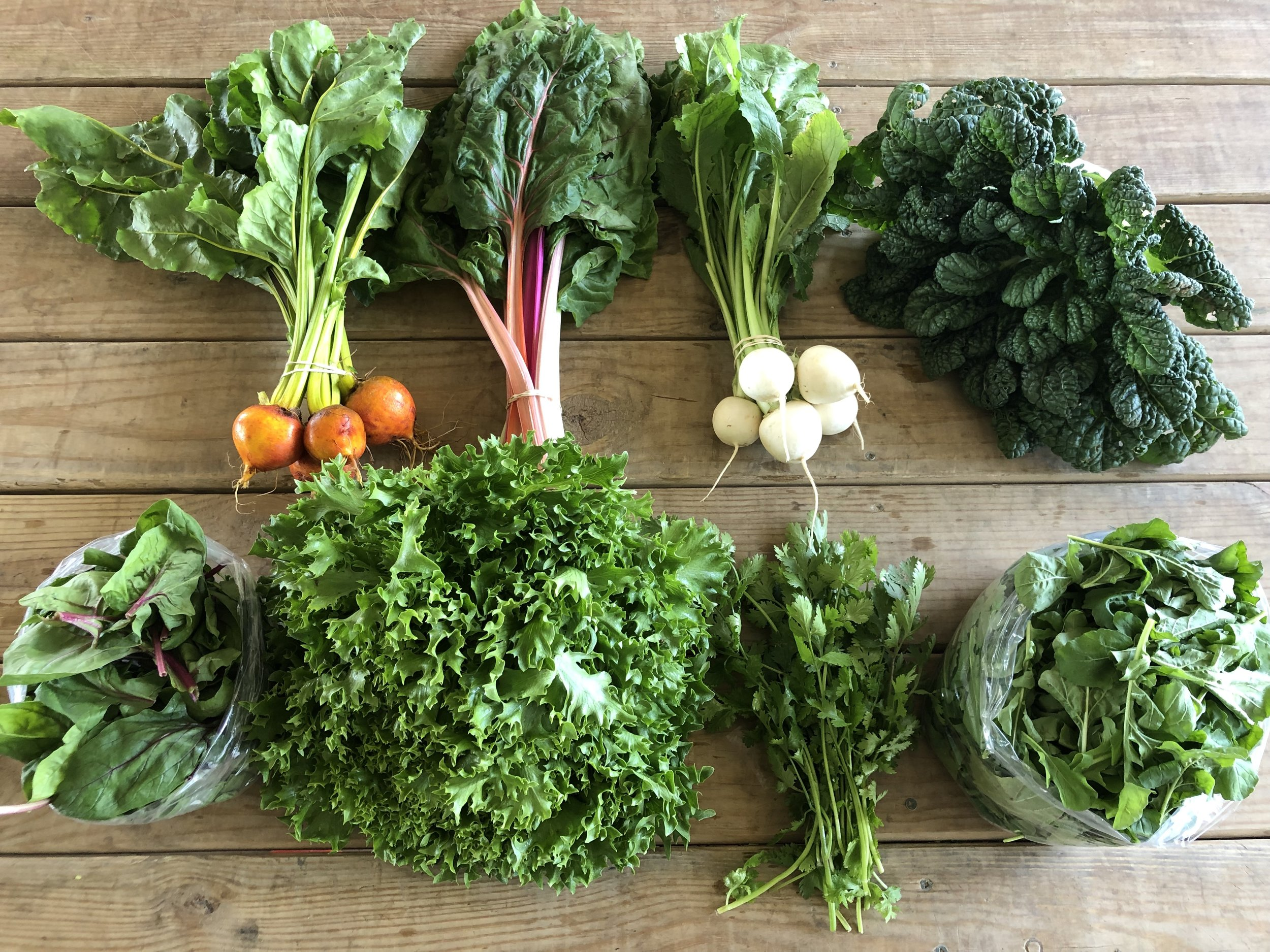 Top Row: Left: Golden Beets with greens, Swiss Chard, Hakurei Turnips, and Yukina Savoy.  Bottom Row: Left: Red Veined Spinach, Head of Lettuce, Cilantro, and Arugula.