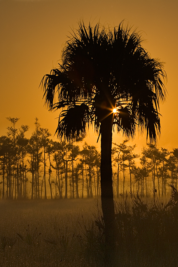 Foggy-Sunrise-Sabal-01.jpg