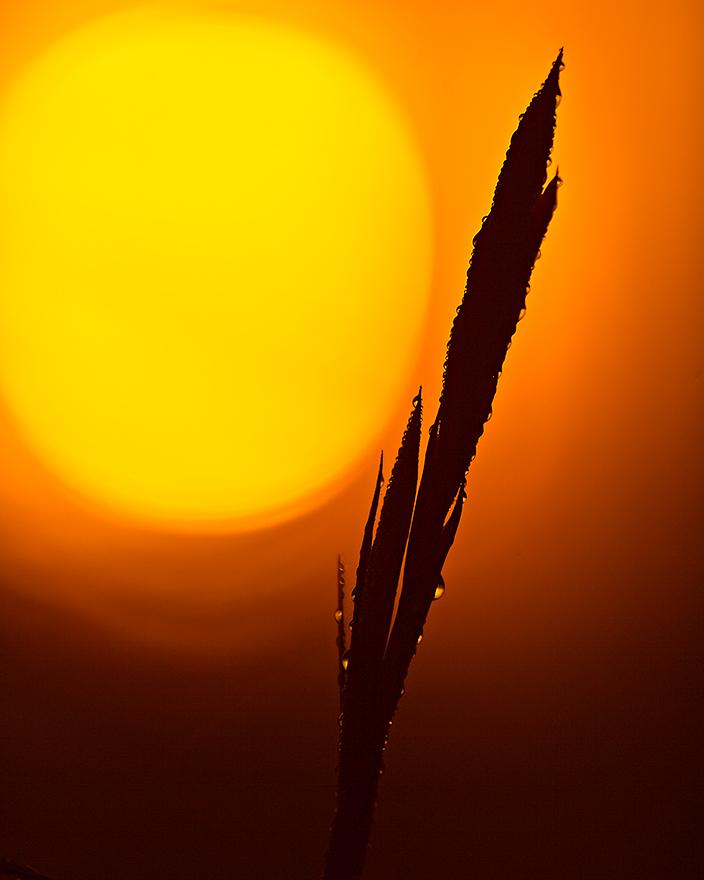 Sunrise-Dew.jpg