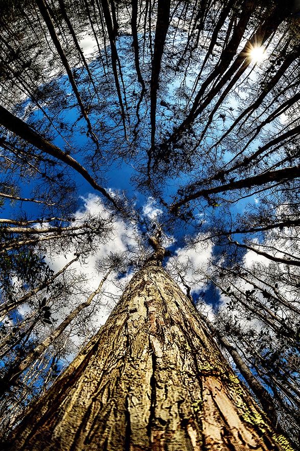 Cypress_Dome_02.jpg