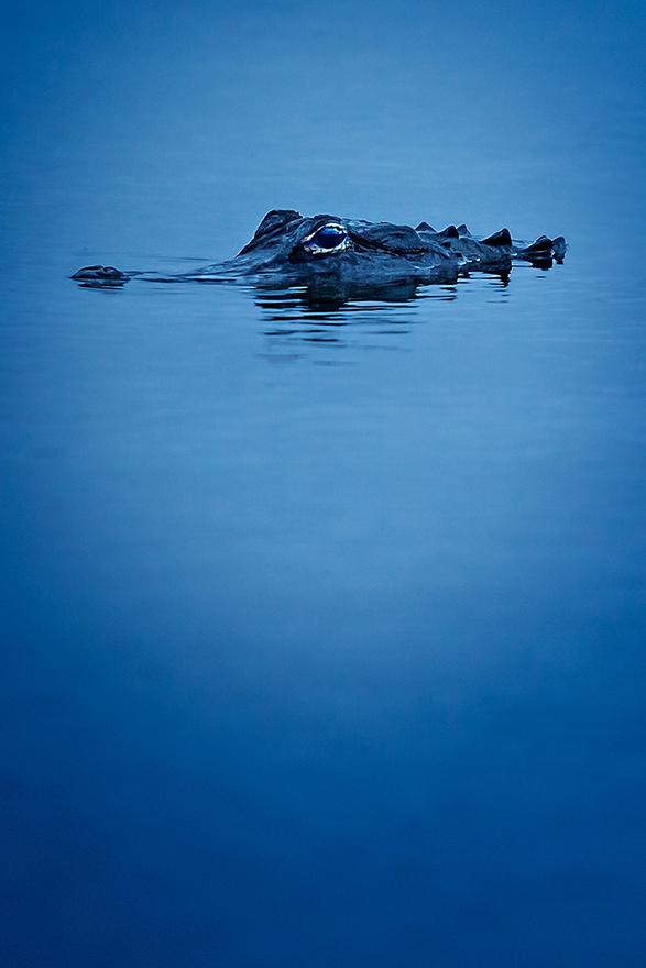 Twilight-Gator-01.jpg
