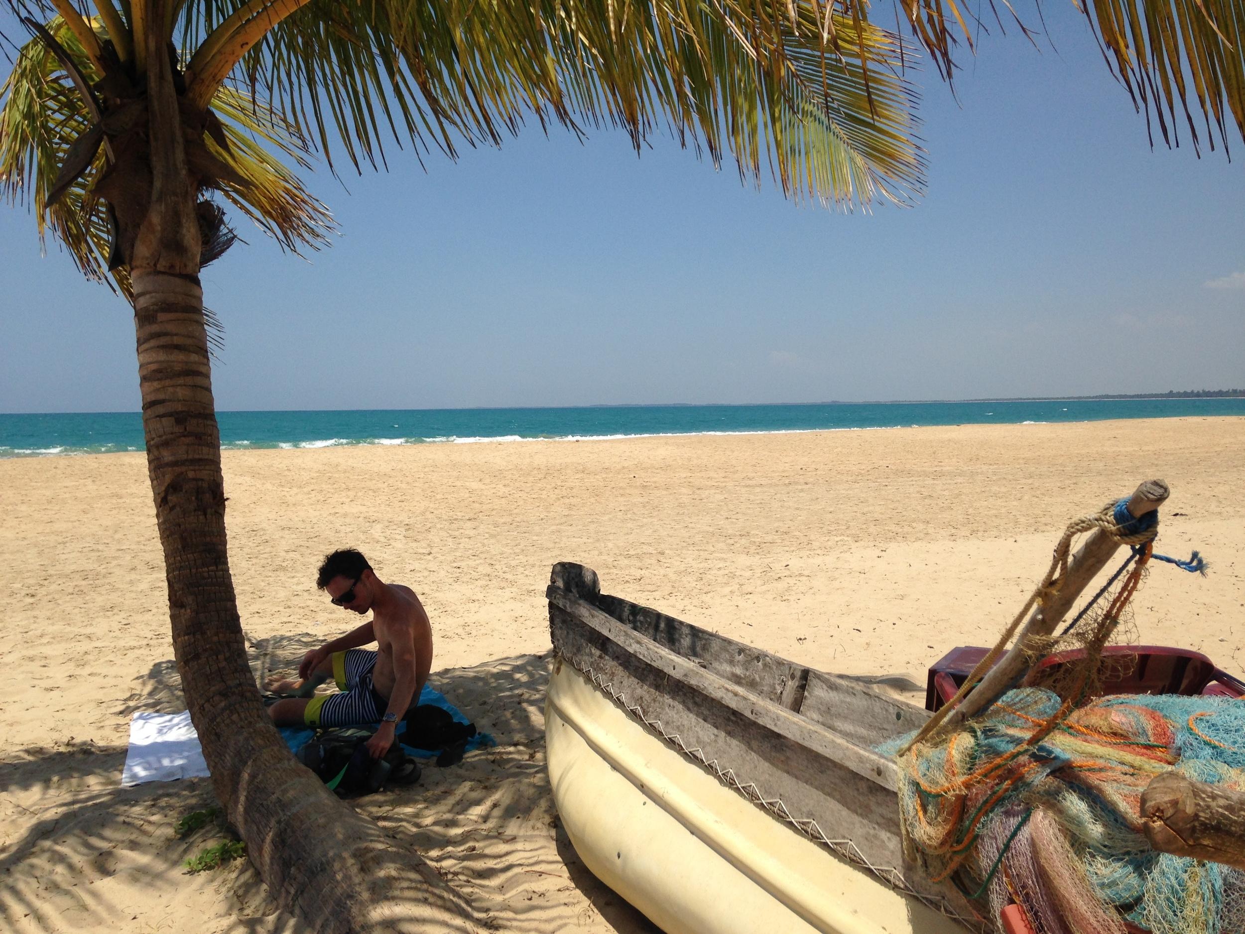 strand sri lanka palmboom