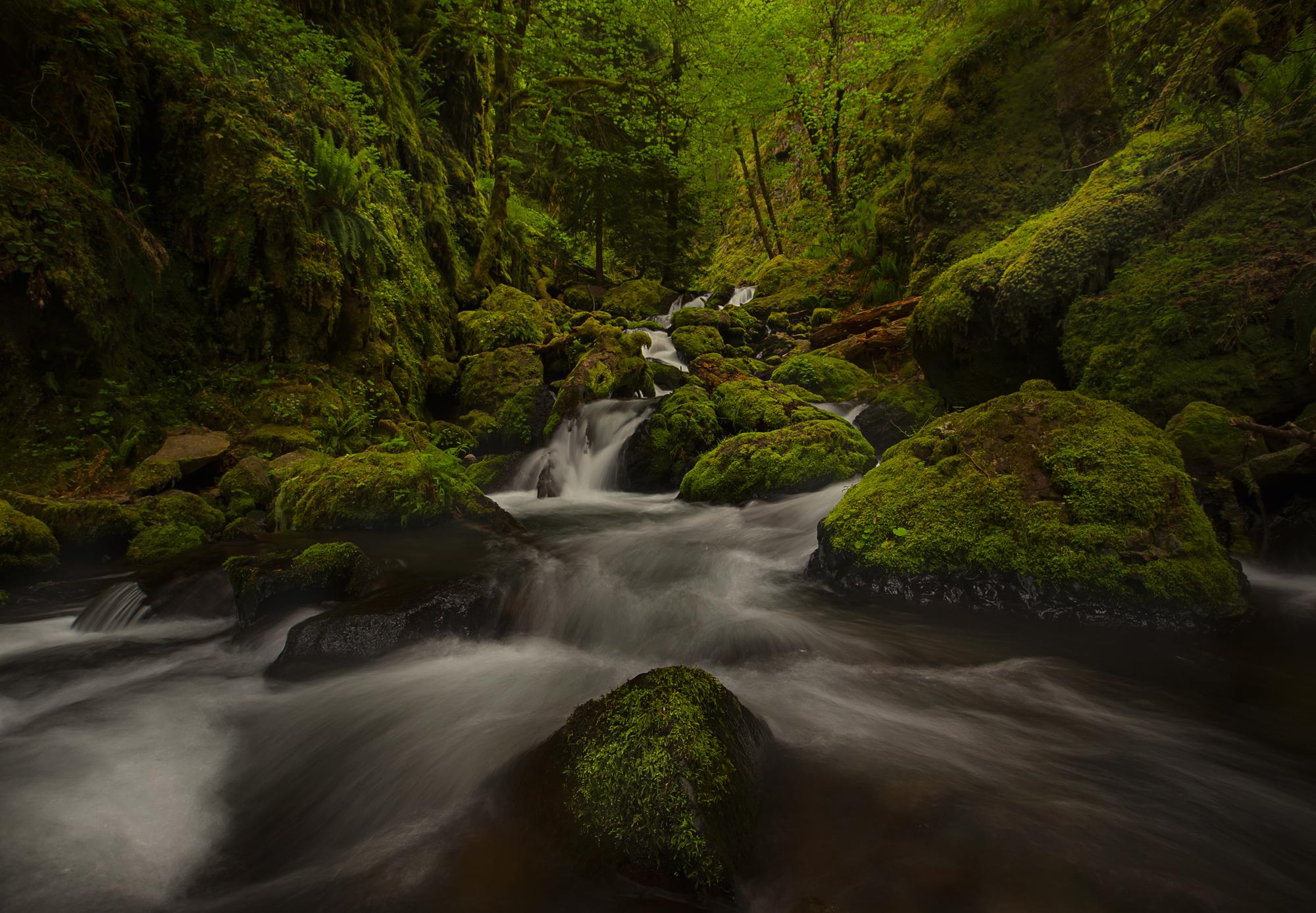 gorton creek cropped.jpg