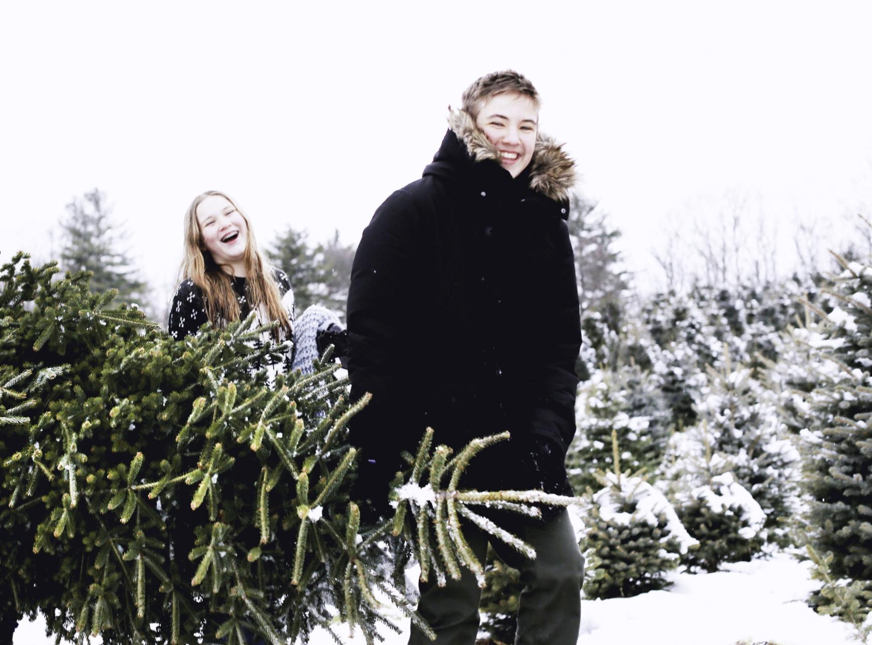 7W1A0735_christmas tree_ritathompson.jpg