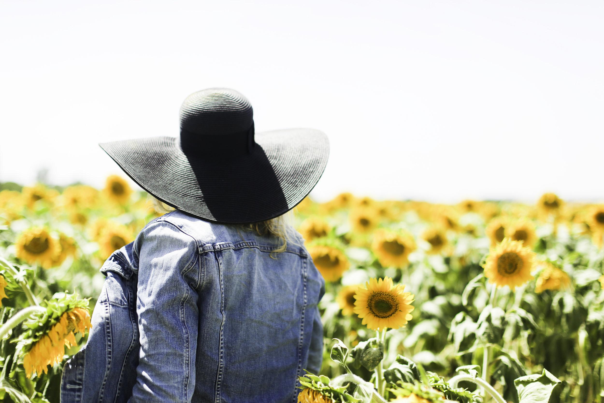 7W1A2781_sunflowers_spain_2_ritathompson.jpg