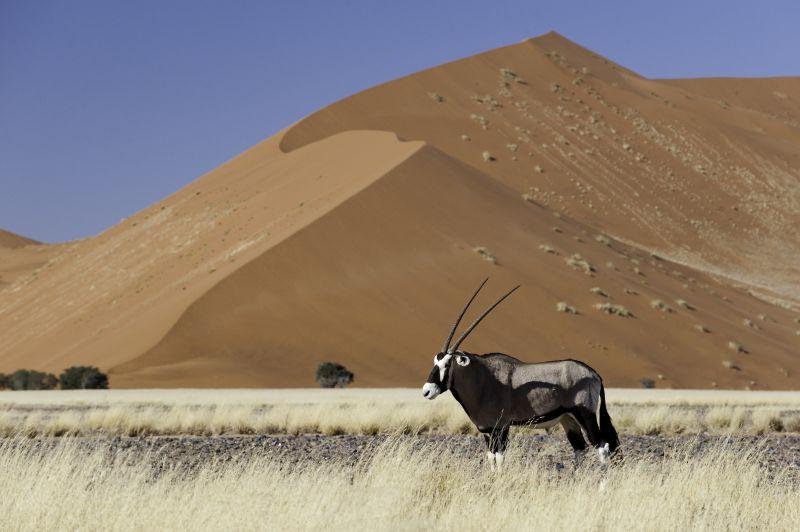 Gemsbok in Sossusvlei-Ultimate Safaris.jpg