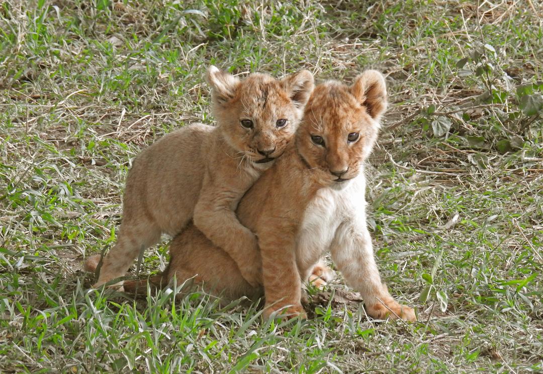 Cubs4.JPG