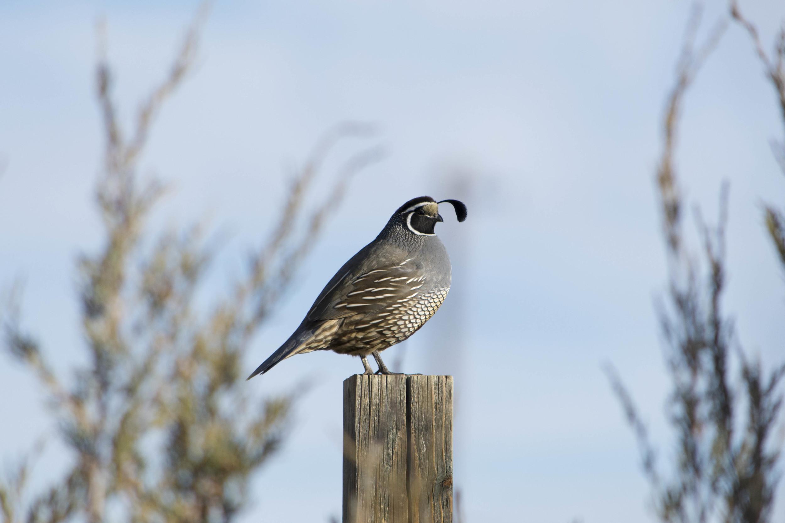 Nevada Bird Count