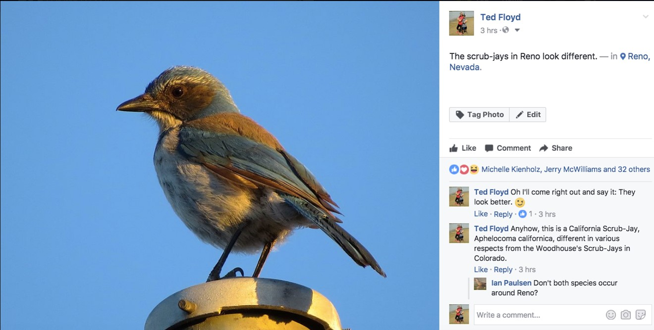 Ted Floyd's Facebook entry on the scrub-jay, discussed in his keynote.