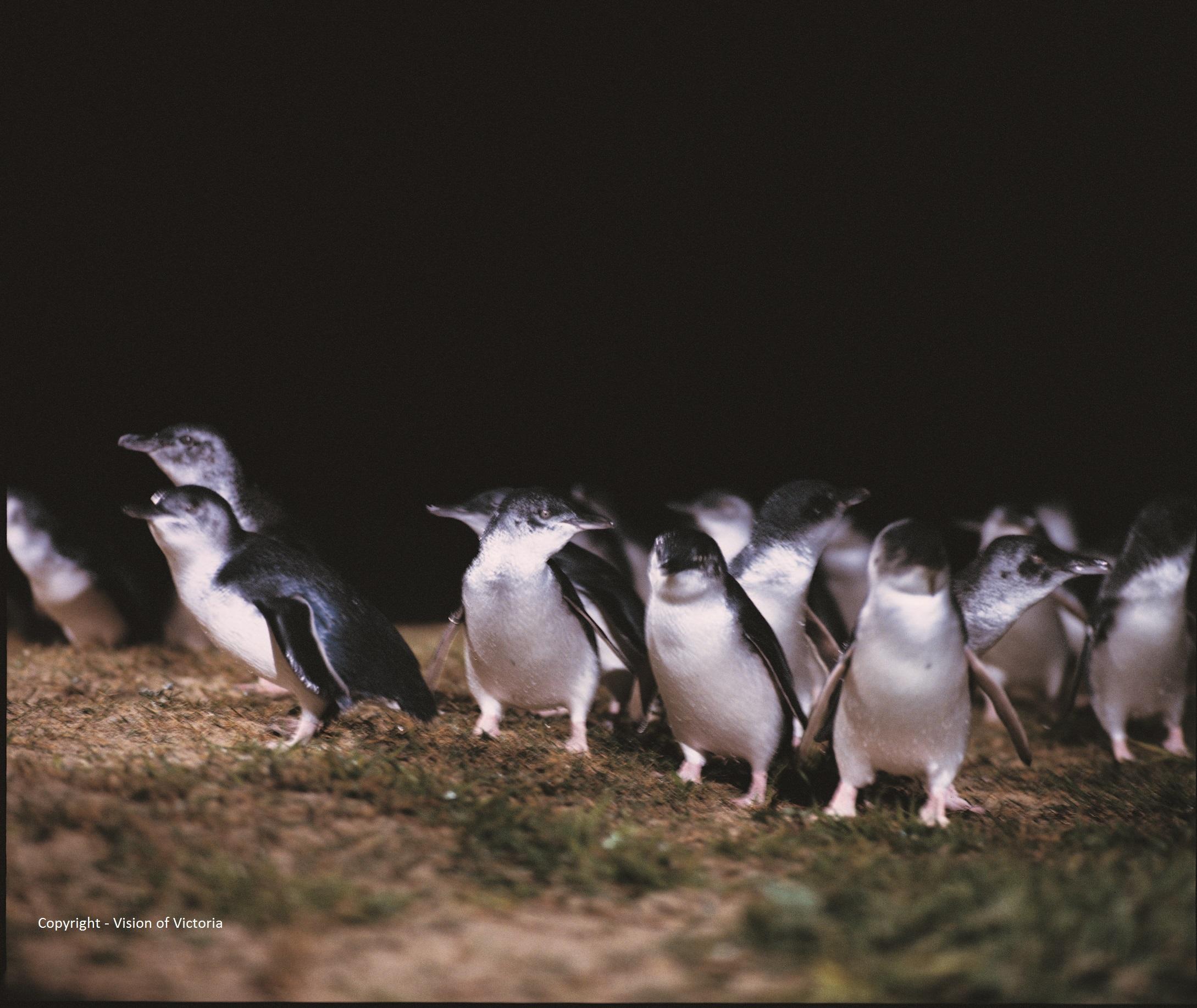 visionsofvictoria1057701-304 Phillip Island Nature park.jpg