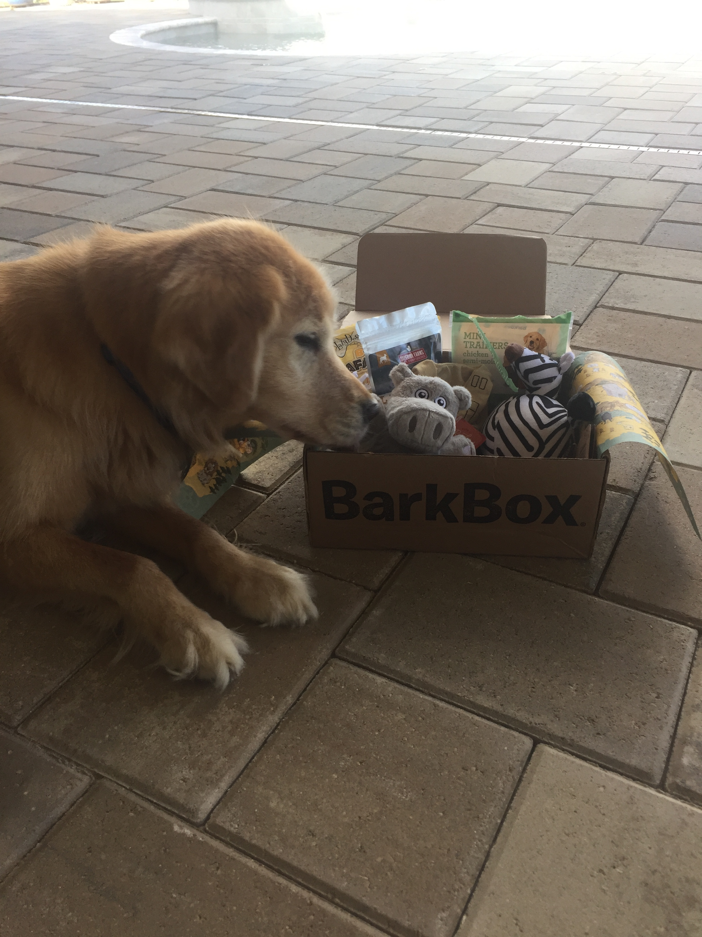Barkbox review coupon code dog toy whats inside a barkbox