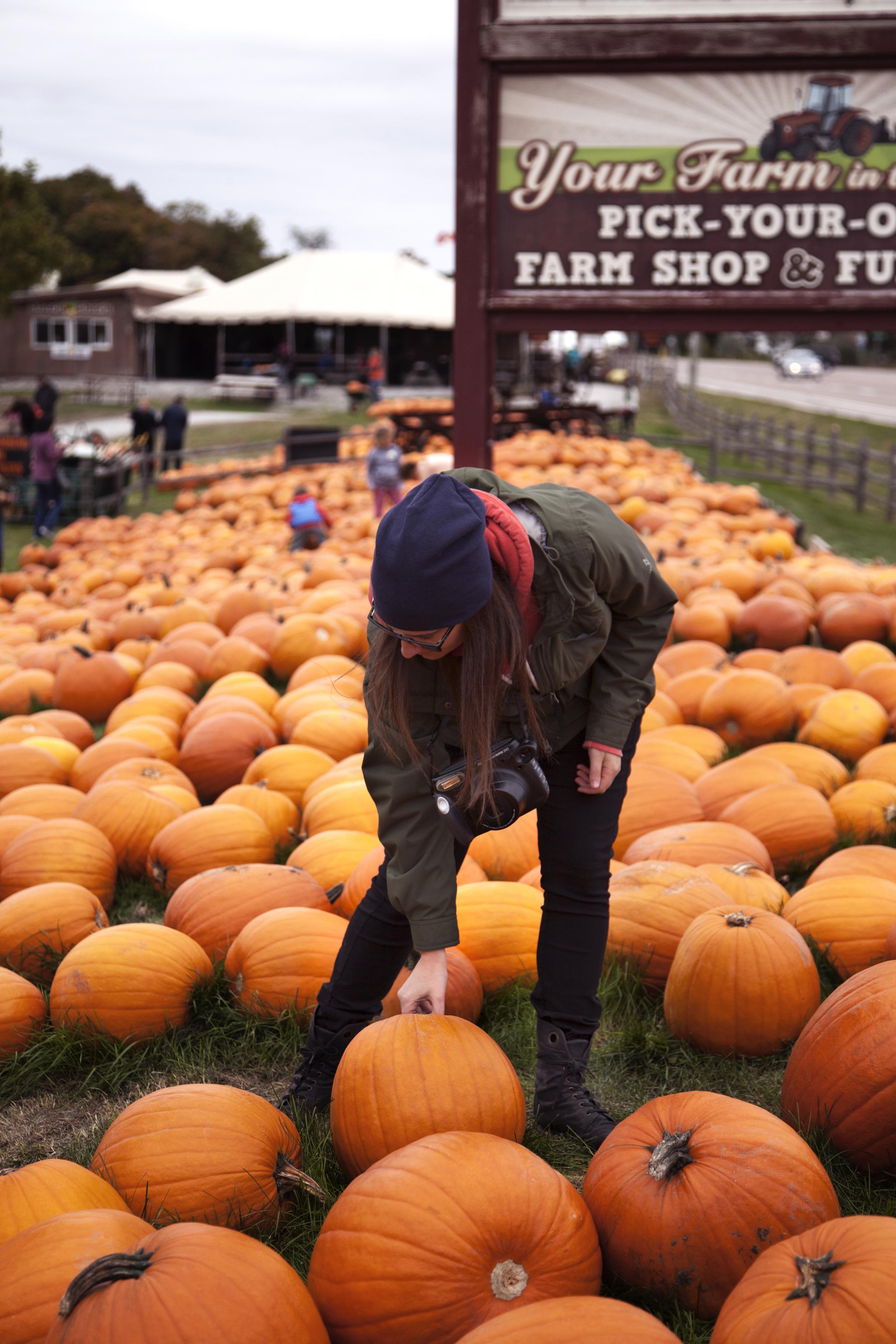 pumpkin patch x.jpg