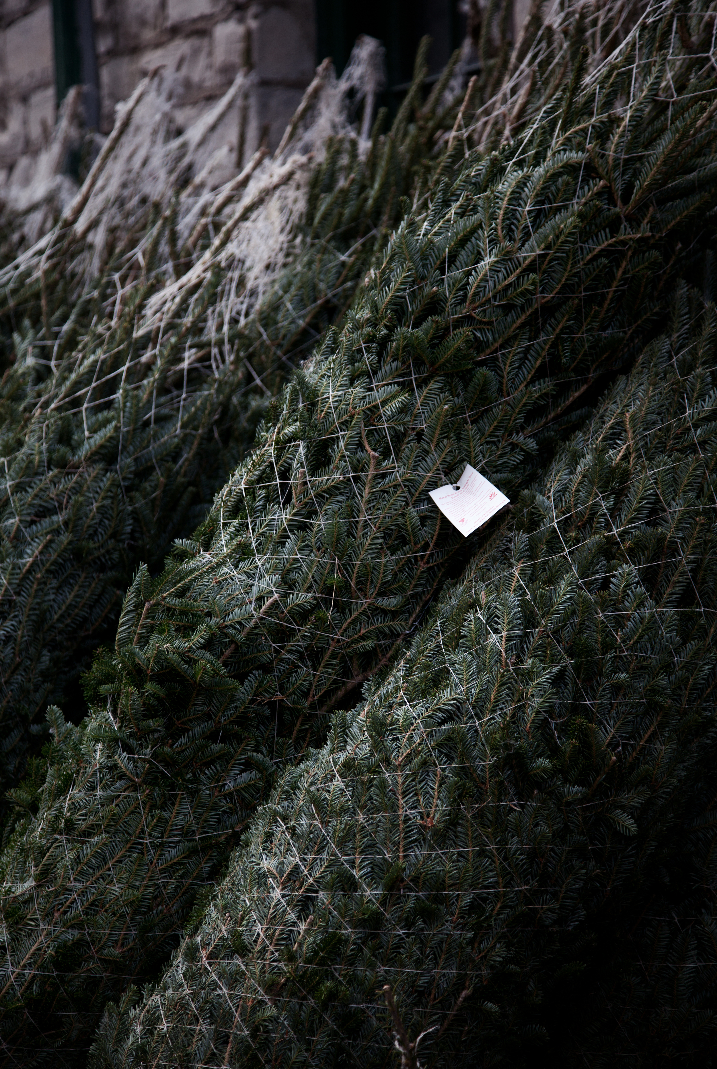 christmas market i.jpg