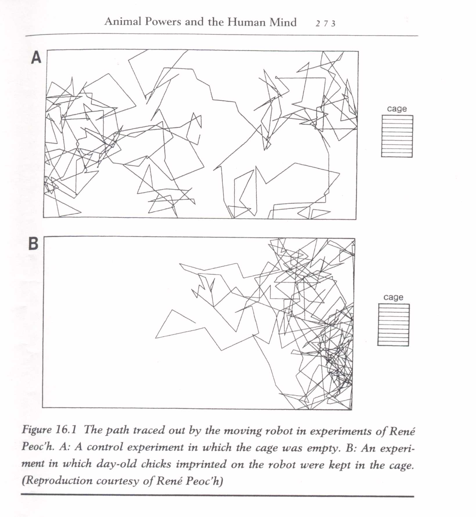 1986, 1995 -  CHICKENS AFFECT ROBOT MOVEMENT -René Peoc'h, french researcher. In his 1986 investigations, Peoc'h established that chickens who had imprinted onto a robot and then placed in a cage in a room where the robot was under a random movement programme,were able to draw the robot closer to the cage. Non-imprinted chickens had no effect on the robot (above diagram). In 1995 Peoc'h extended these experiments. Again using chickens, in this series of experiments he examined whether chickens would be able to draw a robot carrying a light closer to their cage - the experiment took place in a darkened room. Peoc'h hypothesised that as chickens do not like to be in the dark during the day that 'somehow' they would draw the robot closer. (Thechickens were not imprinted to the robot.) As in the 1986 experiments, he found that the chickens were able to affect the movement of the robot.