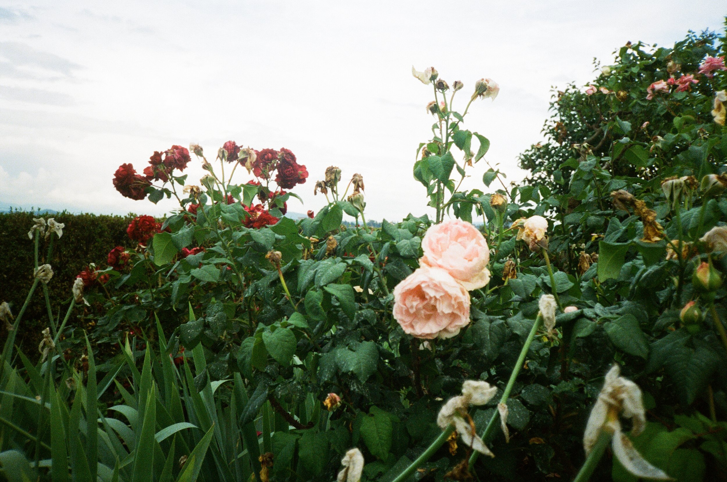 italy-florence-film-43.jpg