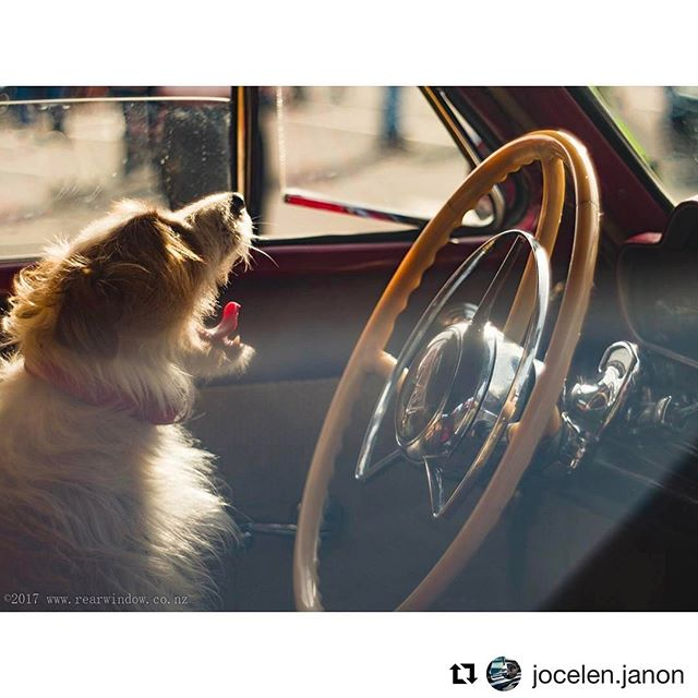 For gorgeous glimpses through car windows check out @jocelen.janon 👉🏼👀👈🏼