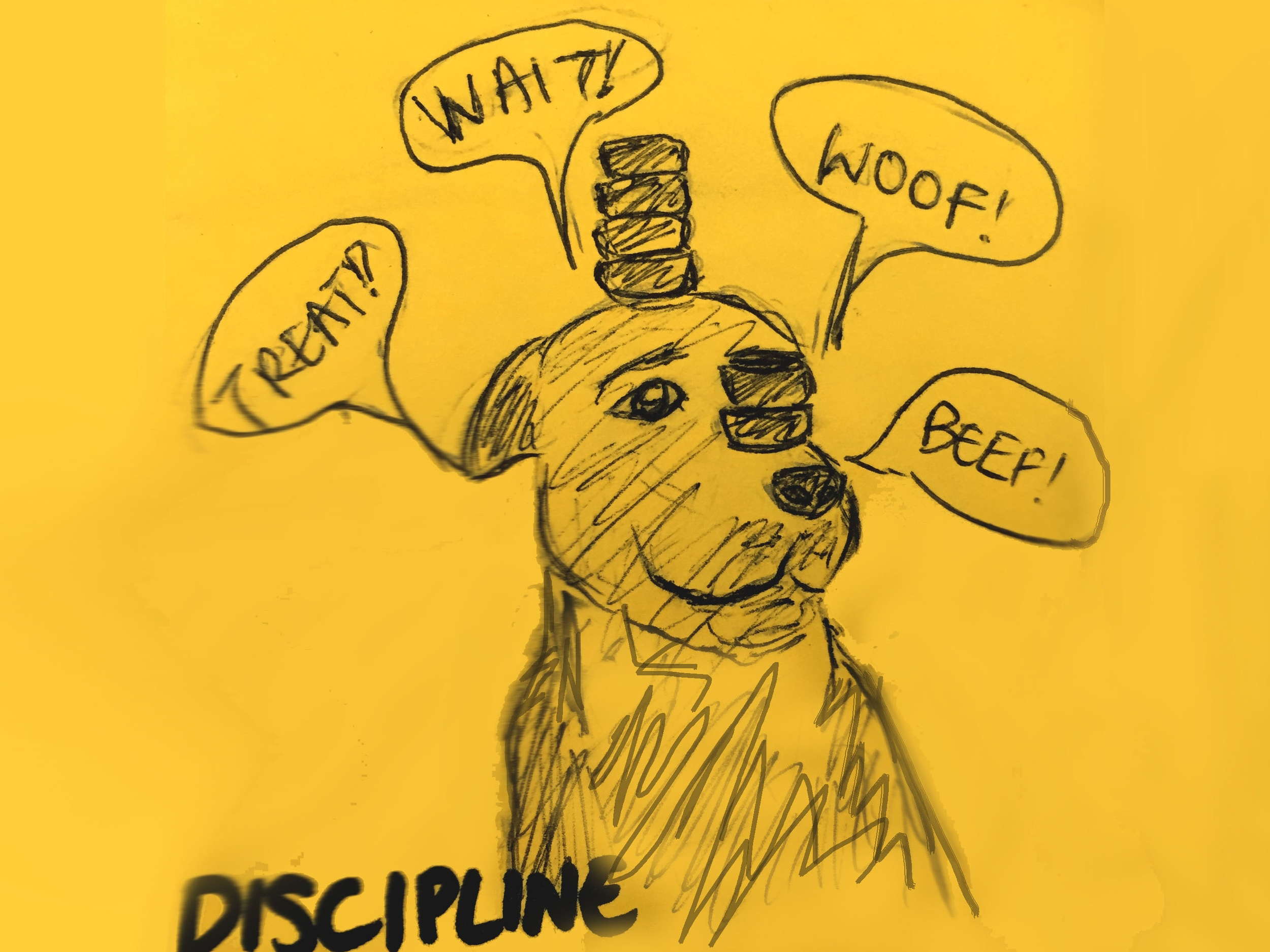 Discipline StrengthsFinder Singapore Trained Dog Balancing Stones