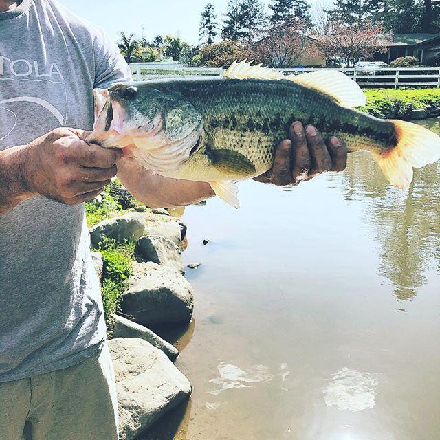 #locatelli  @kimlocatelli  The fish are biting at the Locatelli pond.