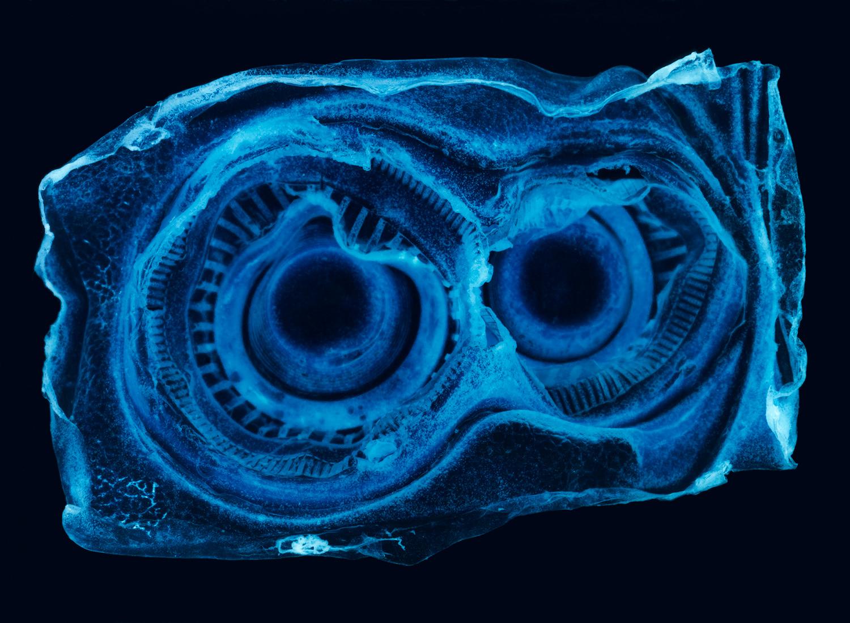 wysiwyg, Penelope Davis,  2008, type c print, 110x150cm