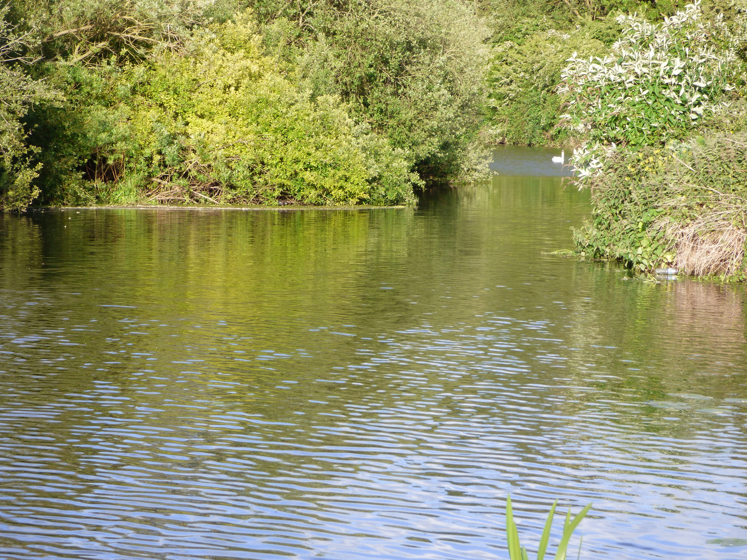 river_nene_tranquil_narrowboats_nene_valley