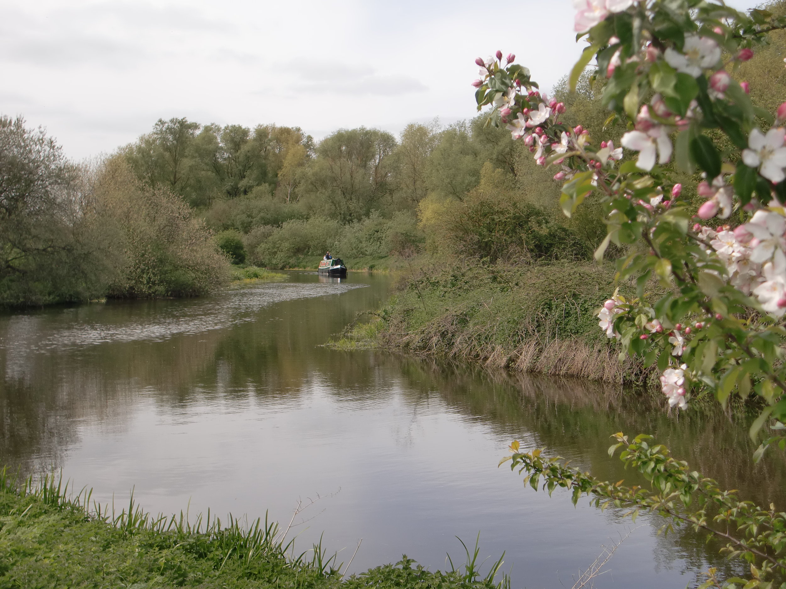 river_nene_earls_barton_narrowboats_white_mills_marina