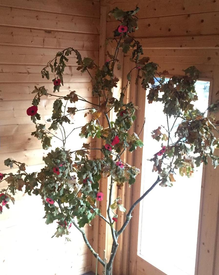 poppy_tree_remembrance_sunday_boathouse_white_mills_marina,