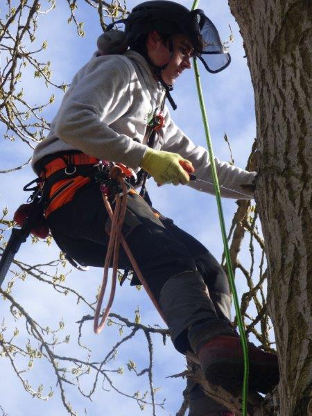 tree_surgery_river_nene_marina_moments_white_mills_marina_moulton_college