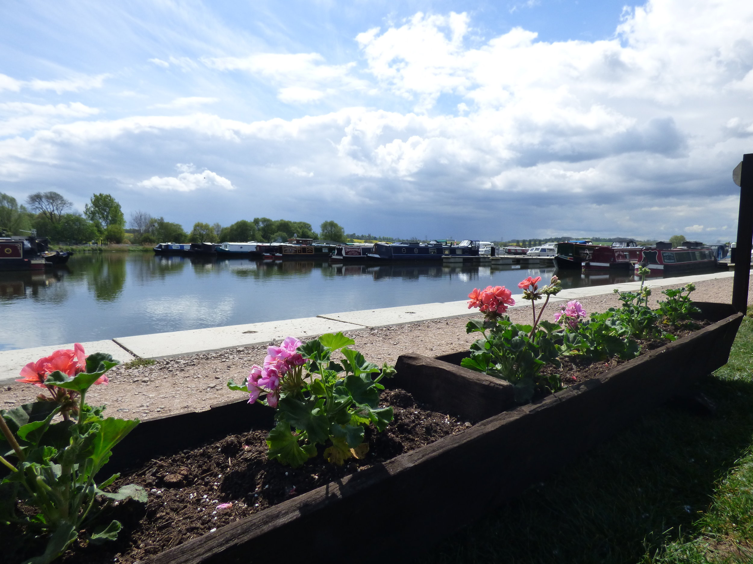 white_mills_marina_river_nene_marina_moments_geraniums