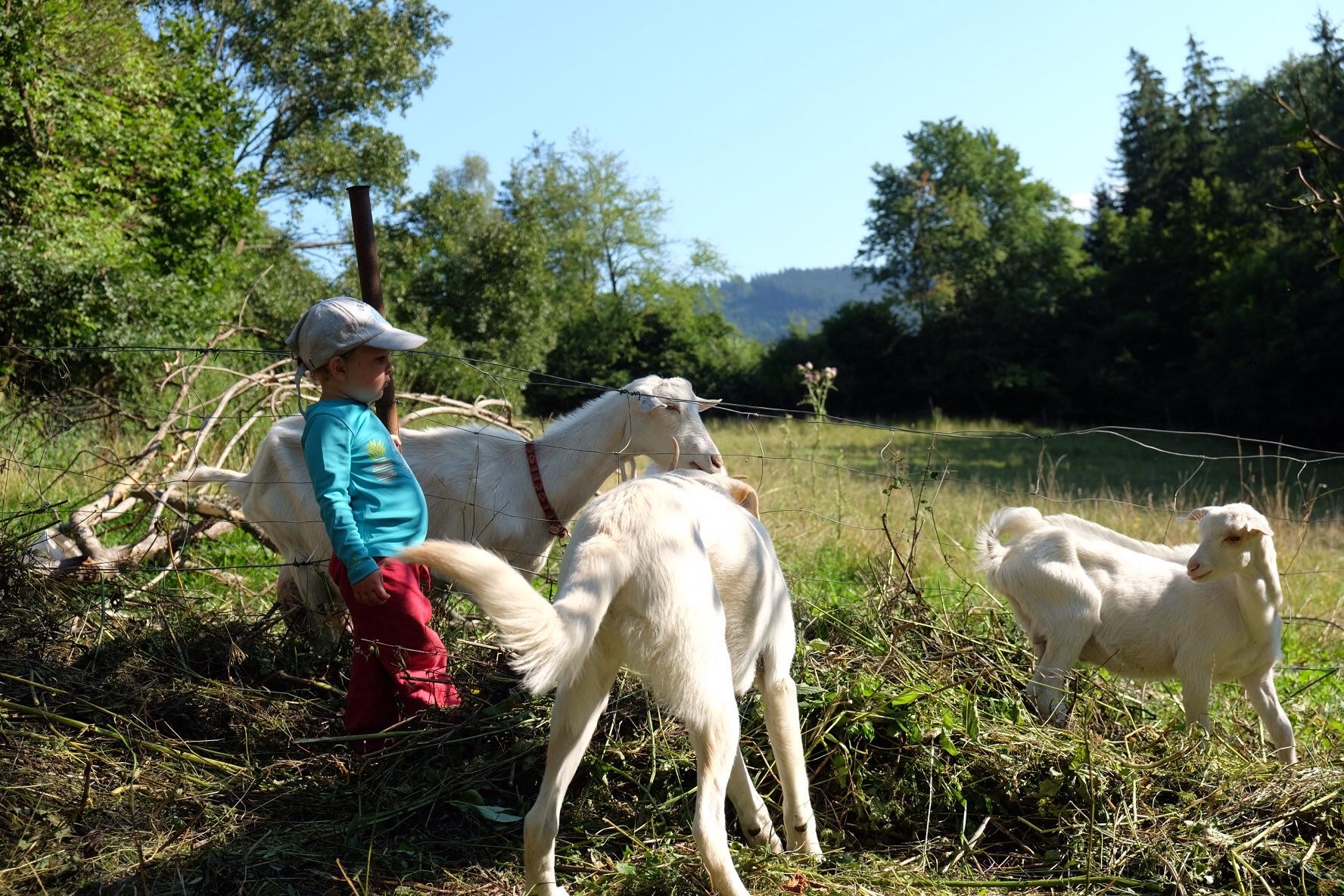Elio et ses copines les chèvres