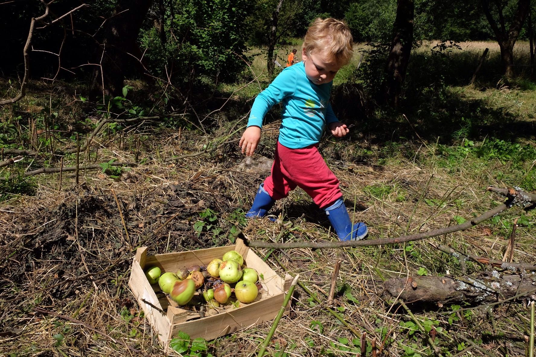 Les pommes pour les animaux