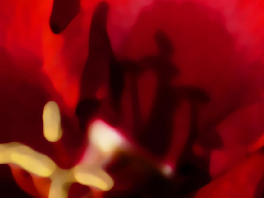 photographie_photography_Atelier_Jardins_Christian_Préaud_02