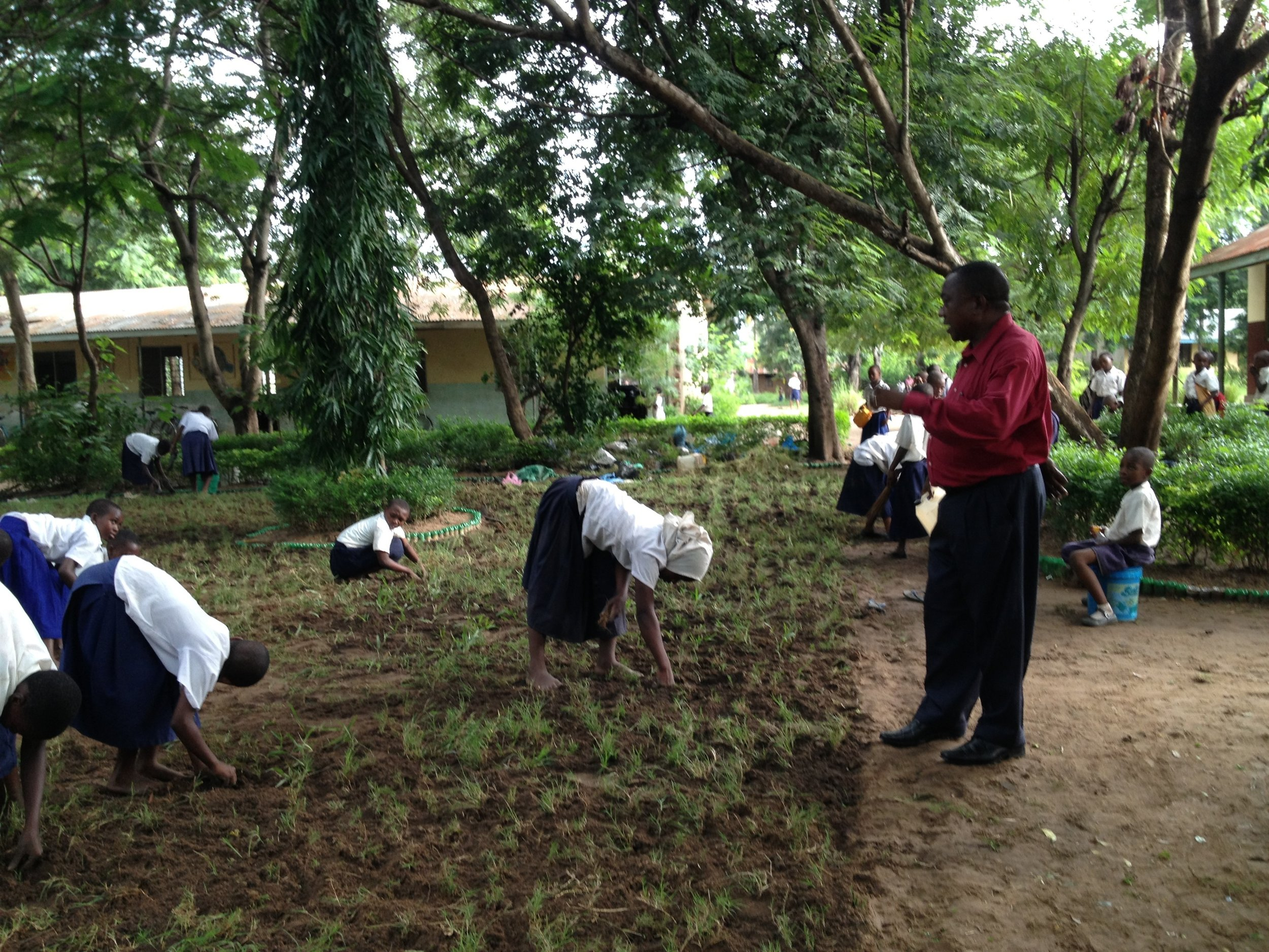 Lusanga Primary School students planting grass to control soil erosion