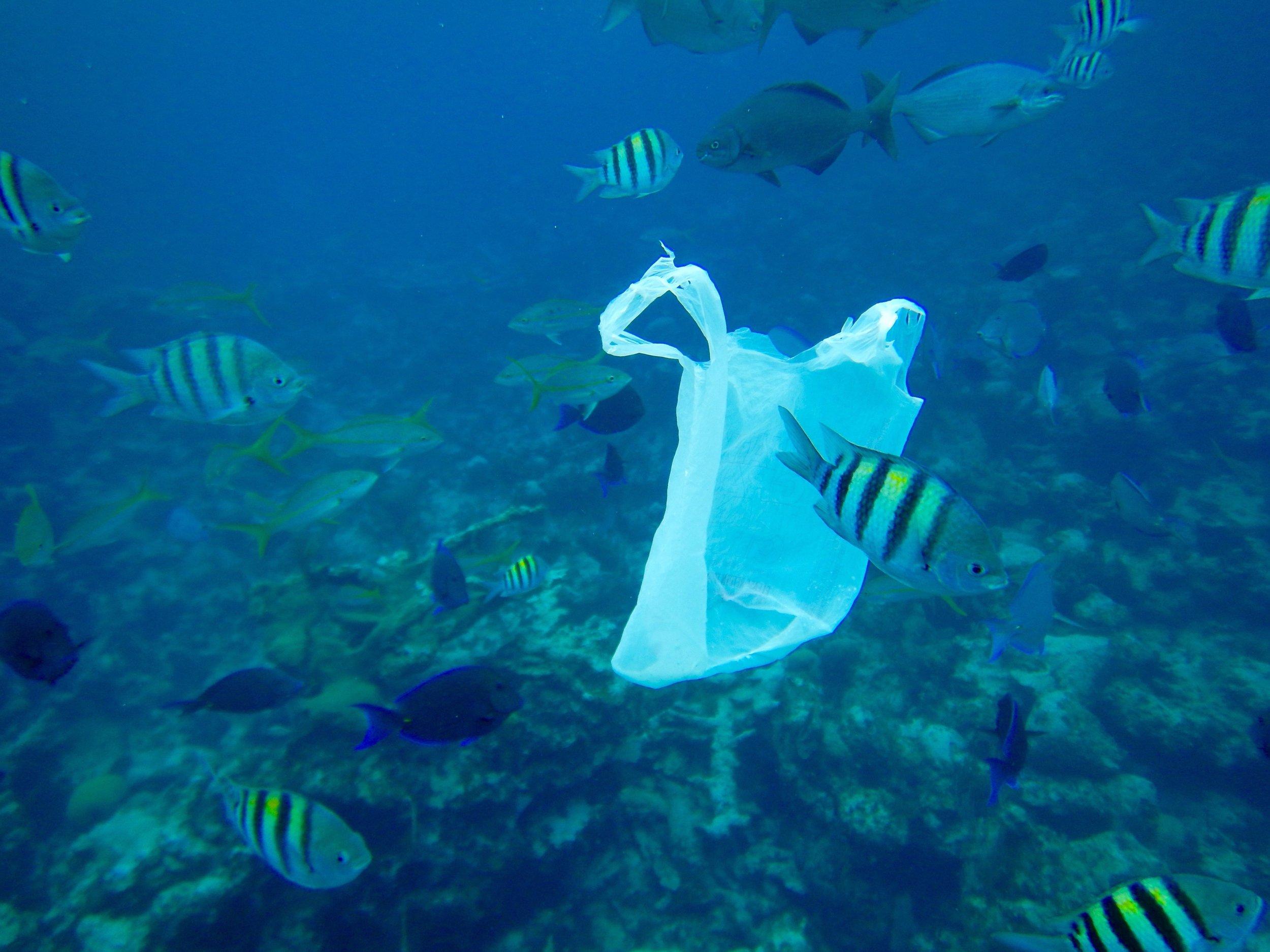 plastic bag in NP BREEF.JPG