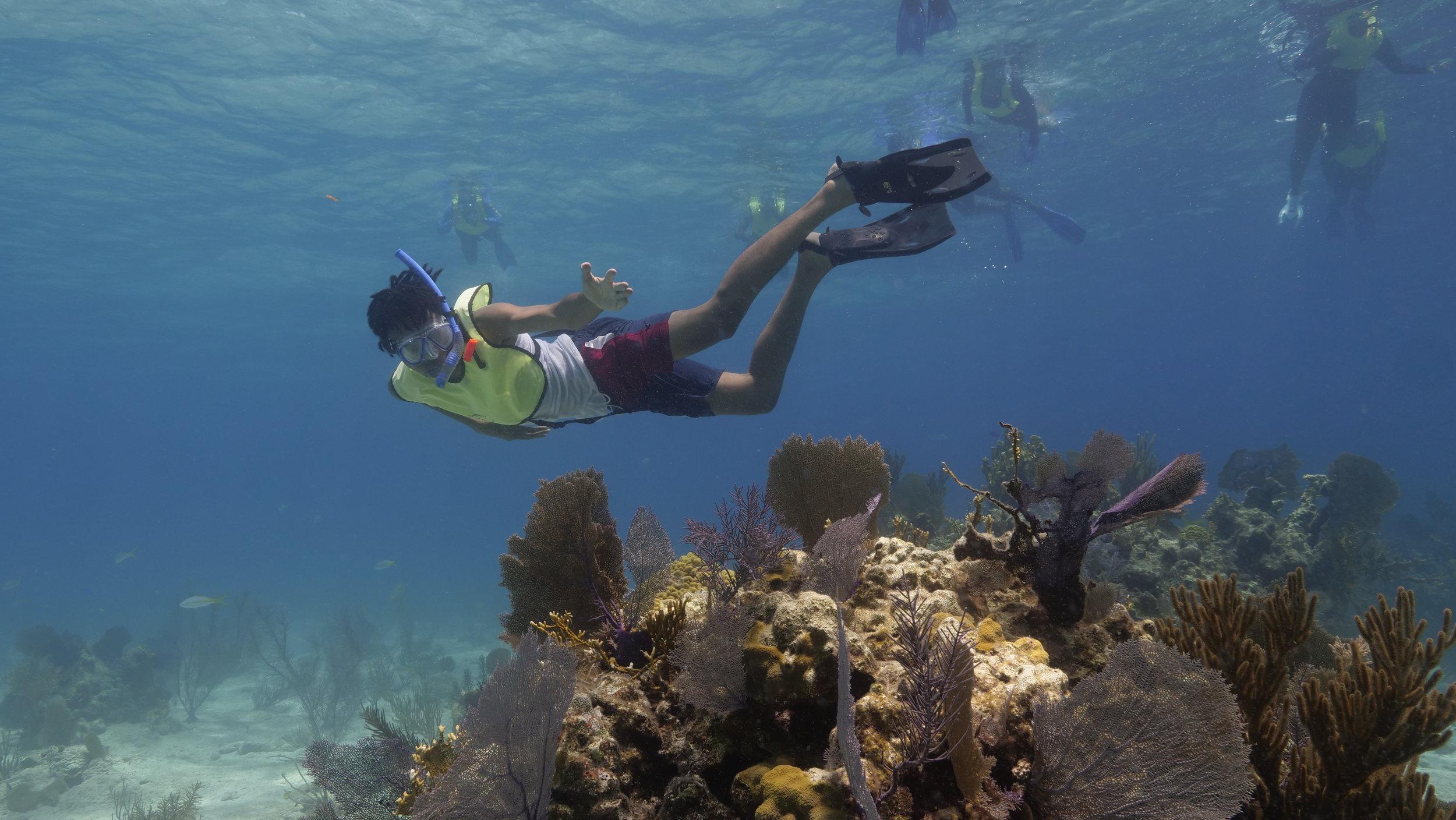 Snorkel-With-Coral.jpg