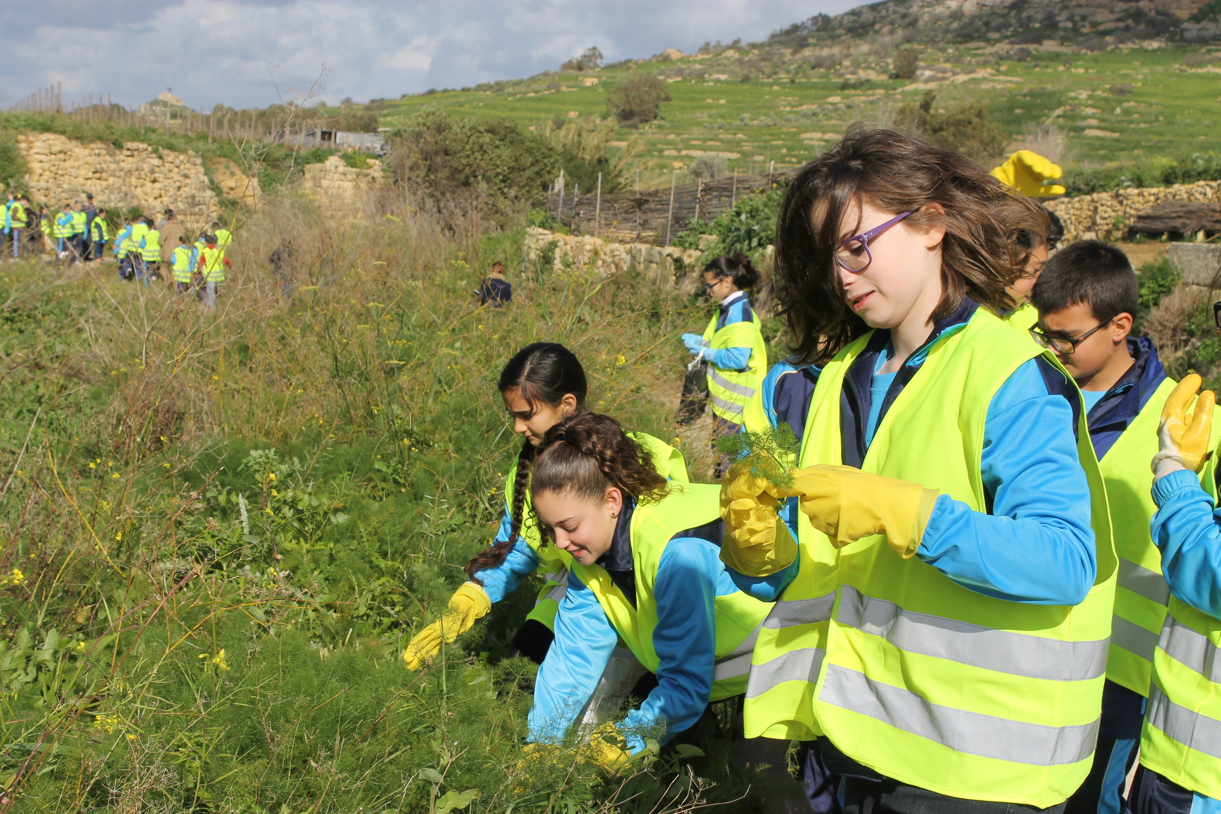 Students of the Gozo College collecting wild plants