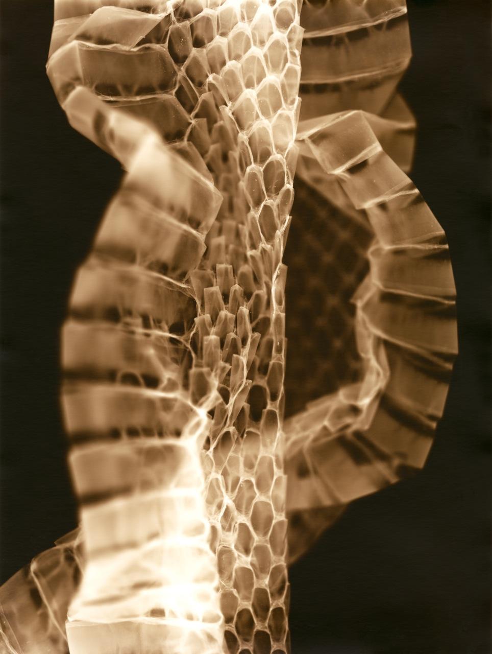 FotogramaScan-snake retouched.jpg