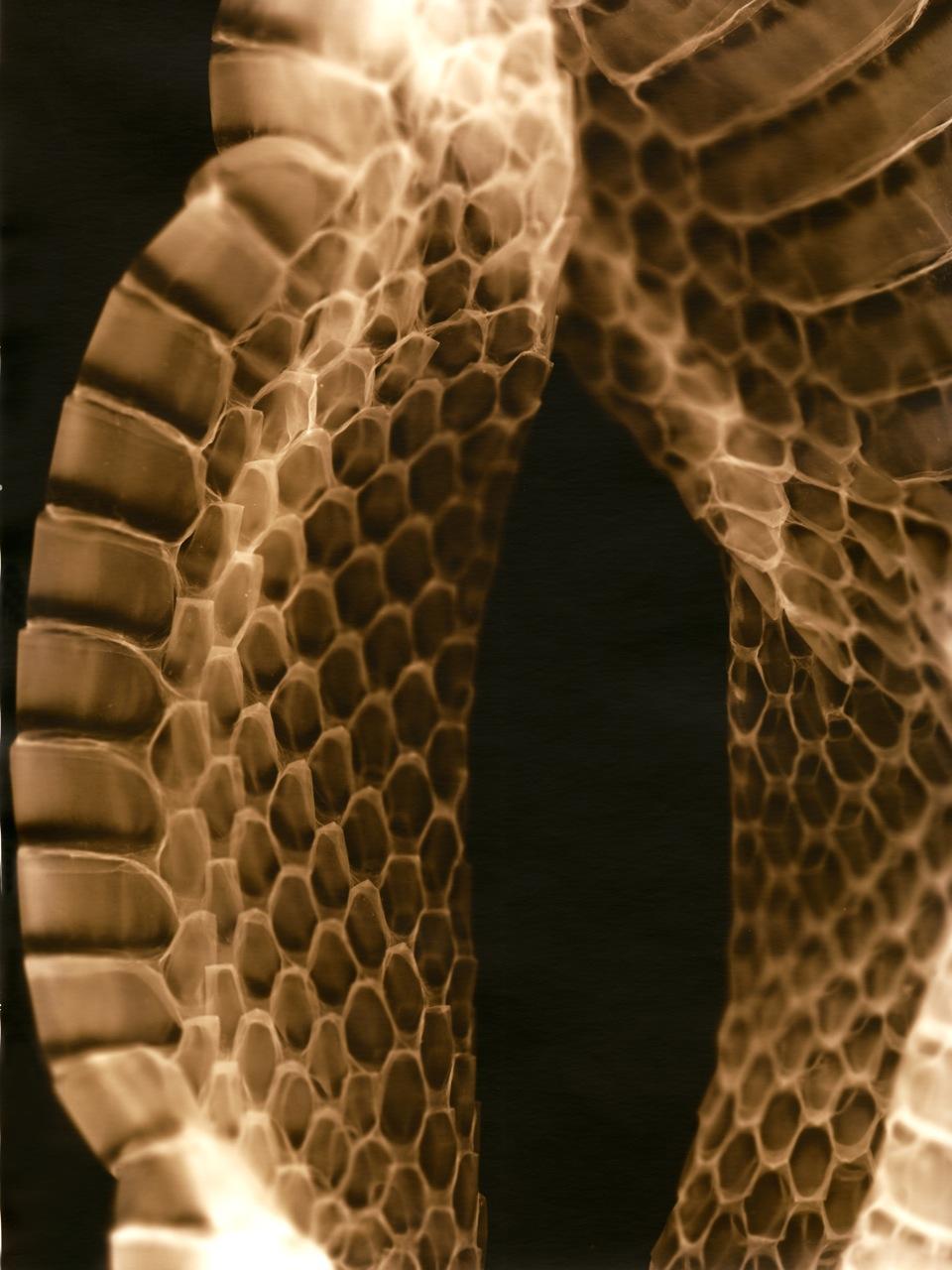 35-Snake 2 retocada.jpg