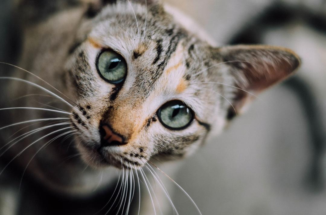 cat-looking-2.jpg